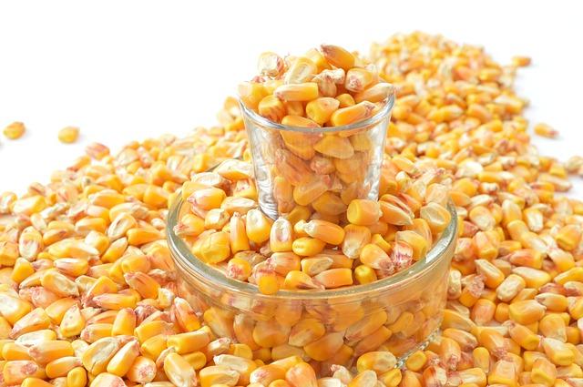 Ne plus suspendre le maïs MON 810 ?