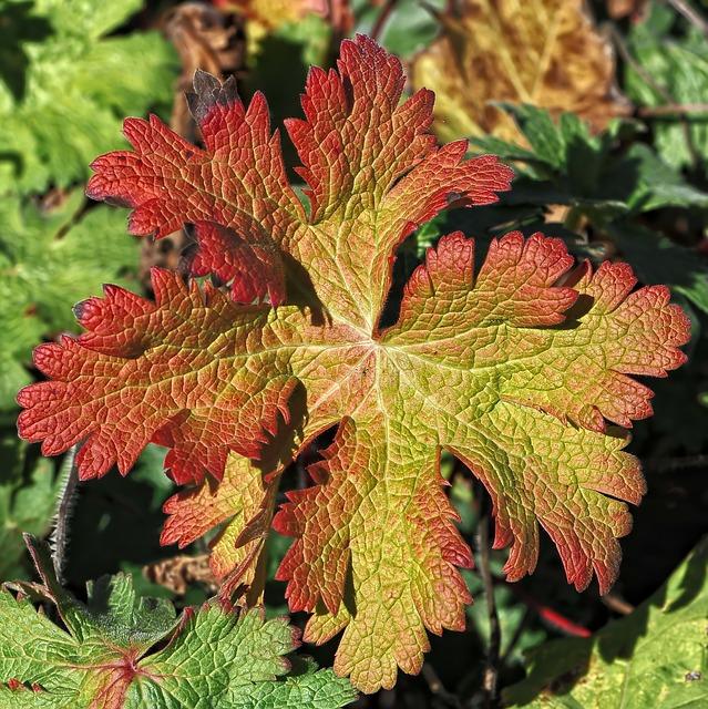 Calendrier de semence d'automne