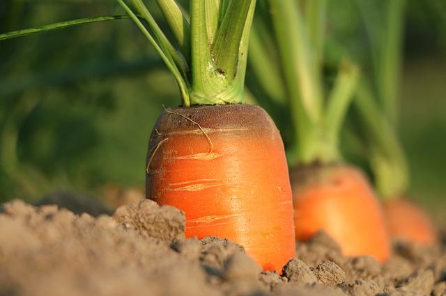 Commande des graines et plants