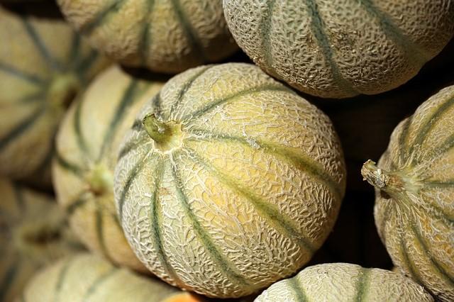 Cultiver les melons dans votre jardin potager