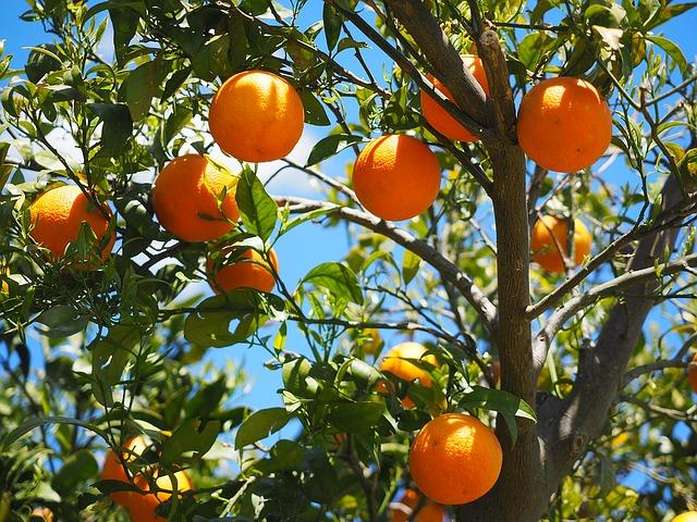 Achat des arbres fruitiers