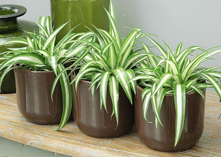 Les plantes dé-polluantes, comment ça marche ?