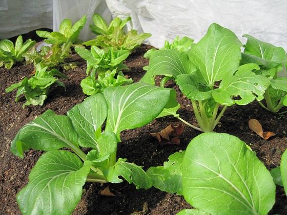 Plantation pour une récolte d'automne: Conseils pour le jardinage à l'automne