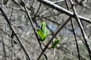 Il a été trop long – mais Spring est sorti.