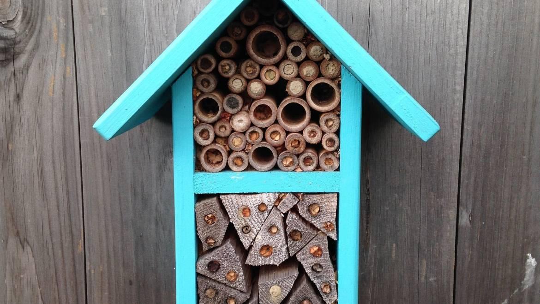 Maisons d'abeilles pour abeilles solitaires indigènes