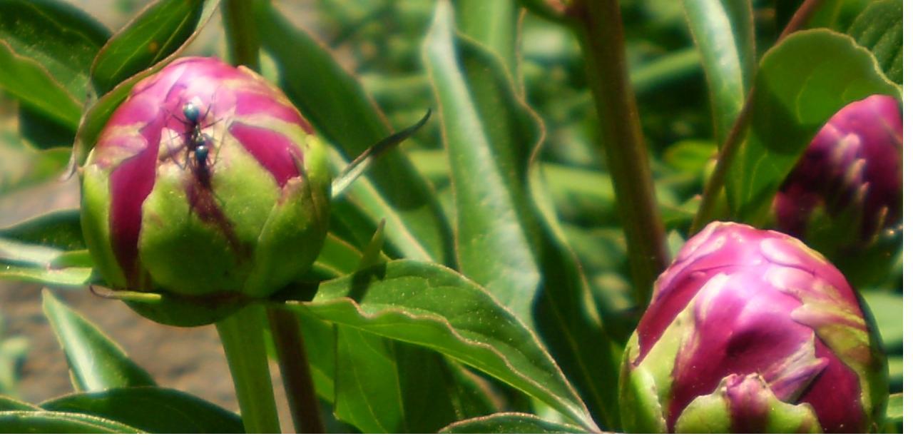 Blog: | L'Les jardins de Laurent du Vieux-Agriculteur