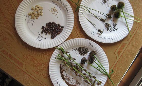 Écoute et économise des graines de vos légumes et fruits de jardin