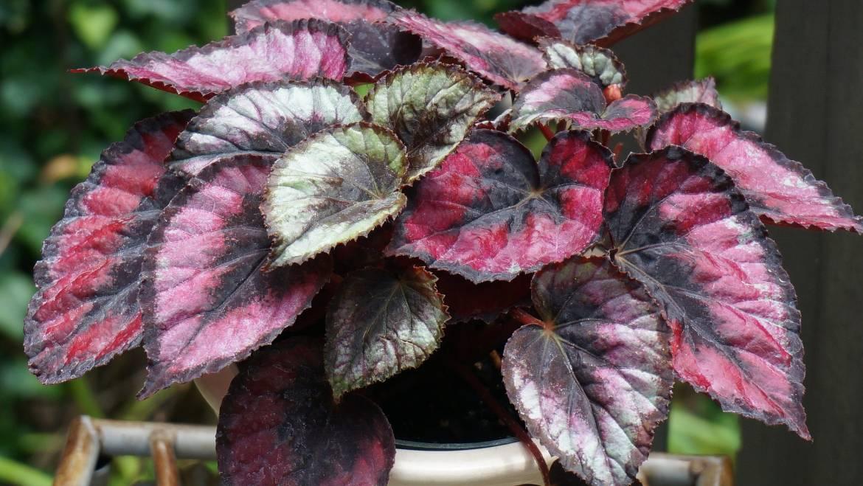Conseils sur la culture des plantes d'intérieur