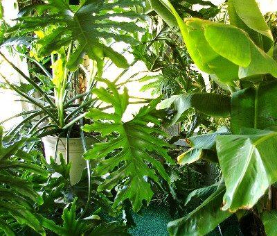 Conseils de jardinage pour le mois de septembre: planter des bulbes et des arbres ainsi que des plantes d'intérieur