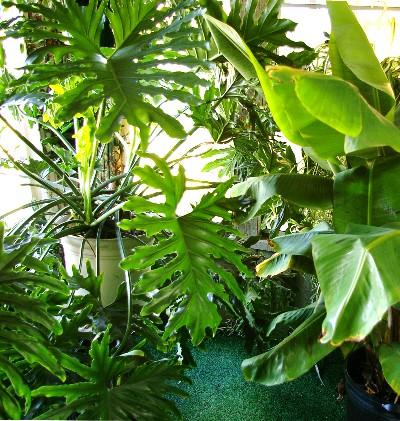 Conseils de jardinage de septembre: planter des bulbes et des arbres plus une expérience de maison