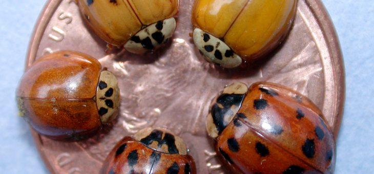 Les insectes envahissent votre maison? | Oldman's Les jardins de Laurent
