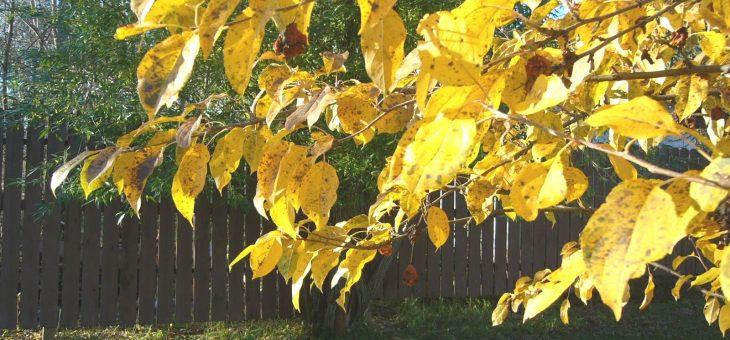 La valeur des feuilles | Oldman's Les jardins de Laurent