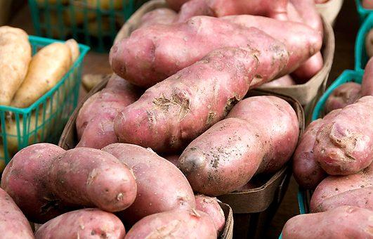Pommes de terre douces: planter, cultiver et récolter des patates douces