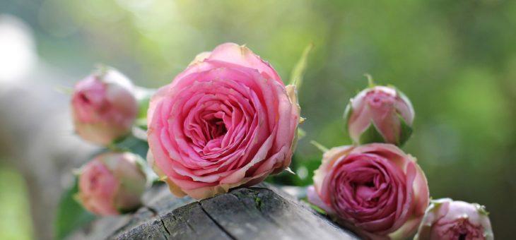 Signification des fleurs: symbolisme des fleurs, des herbes et des arbres