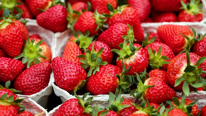 Fraises: Planter, cultiver et récolter des plants de fraises