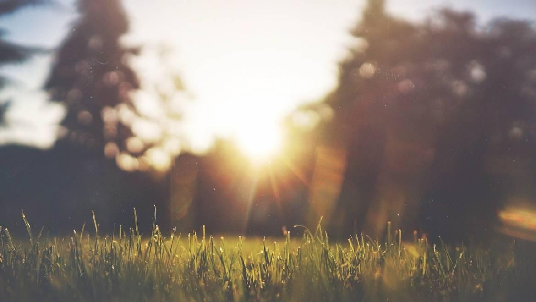 5 astuces pour bien entretenir votre pelouse