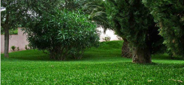 Comment avoir de magnifique pelouse chez soi?