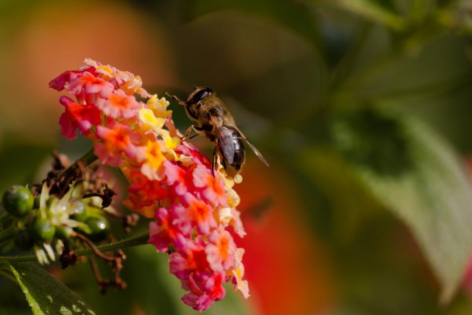 Les différentes techniques apicoles