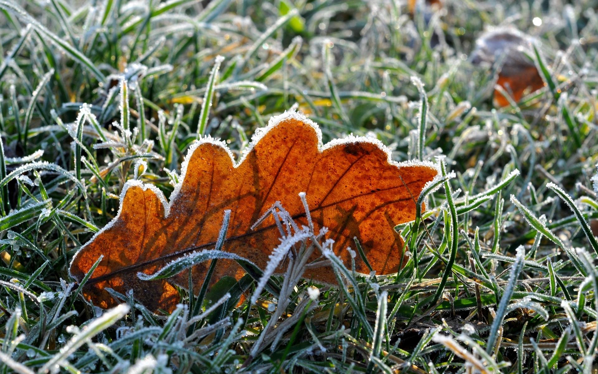 Comment prédire le gel: Préparer et protéger votre jardin