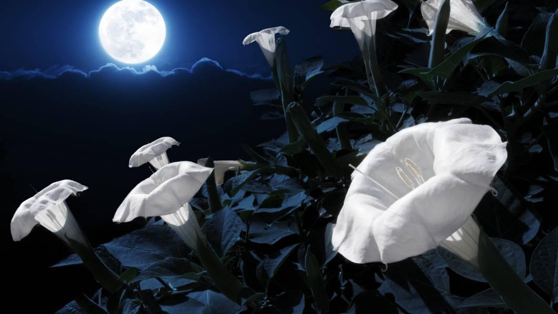 Pleine lune à l'équinoxe de printemps