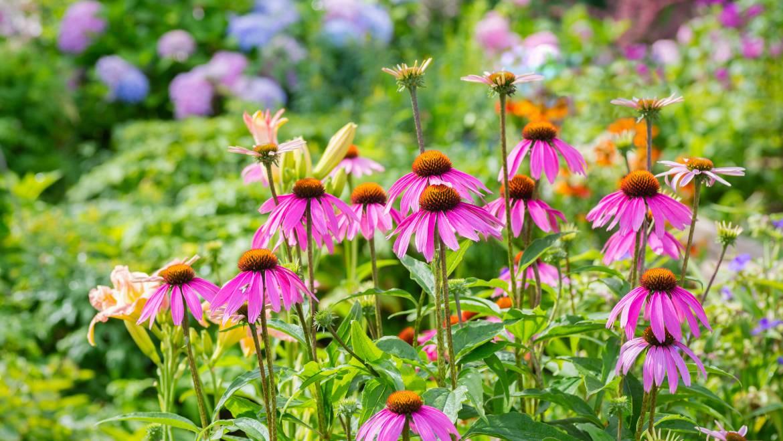 Plantes vivaces les plus faciles à cultiver | Vivaces pour un jardin à faible entretien