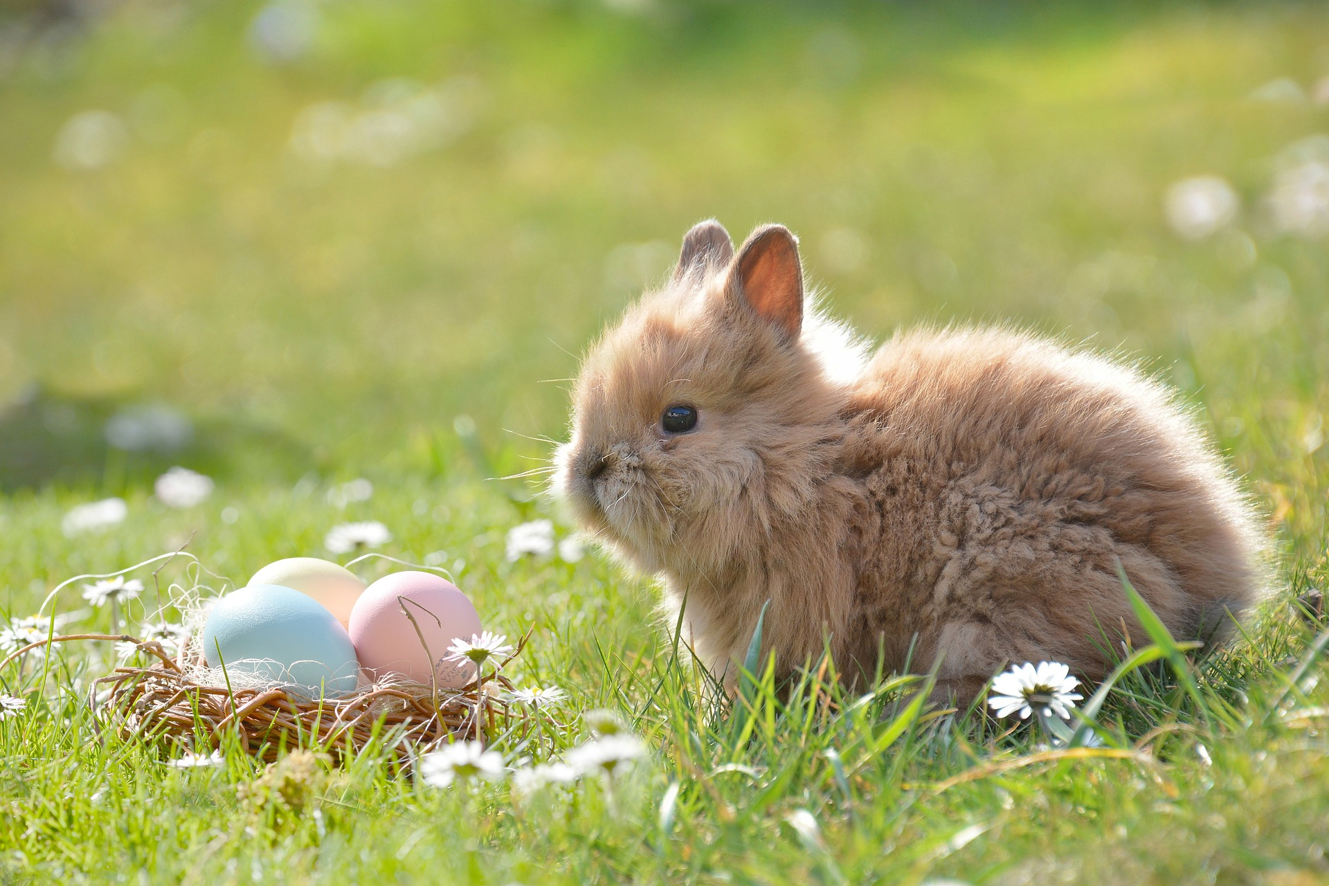 Les origines surprenantes des symboles de Pâques: des agneaux aux lis