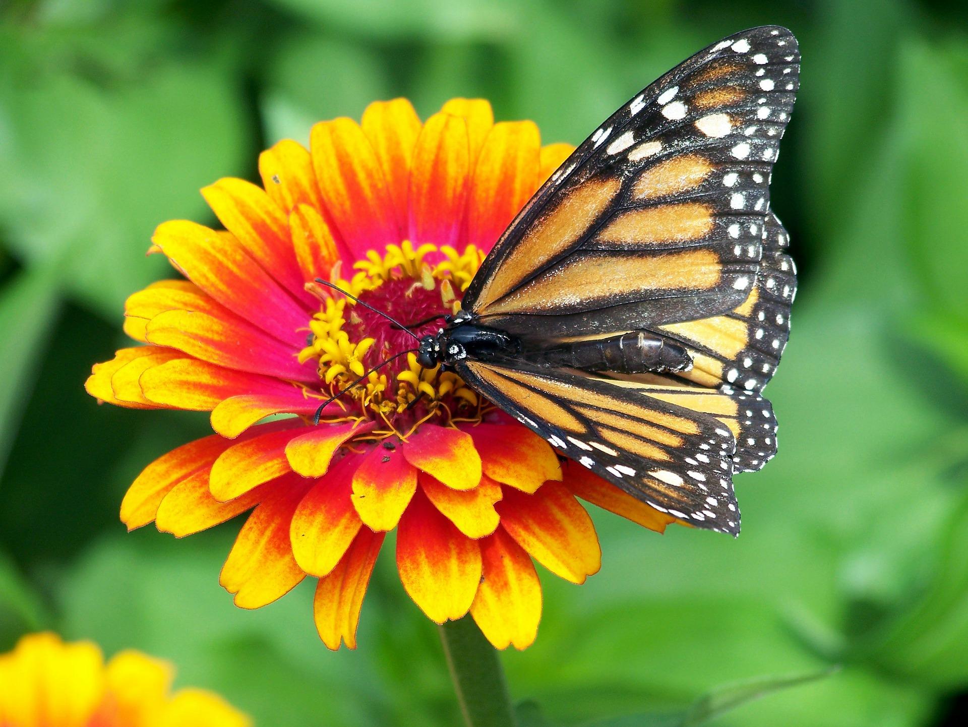 10 conseils pour un jardin respectueux de l'environnement et nécessitant peu d'entretien