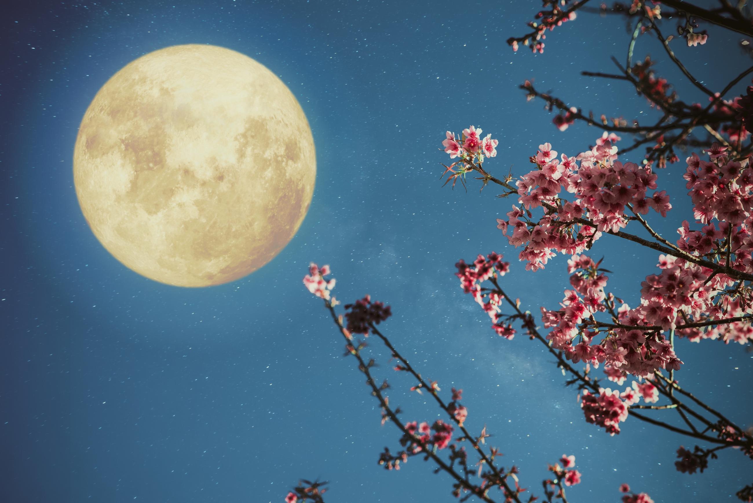 Jardiner près de la lune: Comment planter avant la phase de la lune