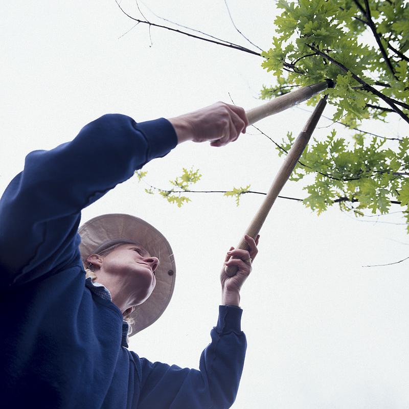 Taille 101: Apprenez à tailler correctement les arbres et les arbustes