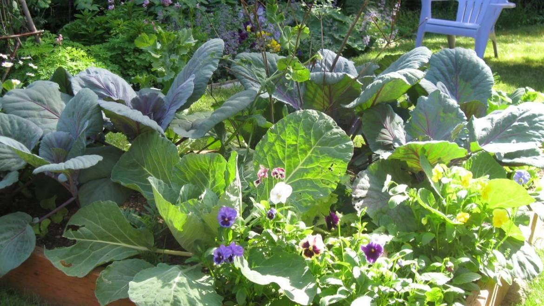 Plans d'aménagement de jardins surélevés