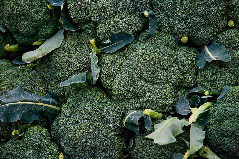 Brocoli: planter, cultiver et récolter des plants de brocoli