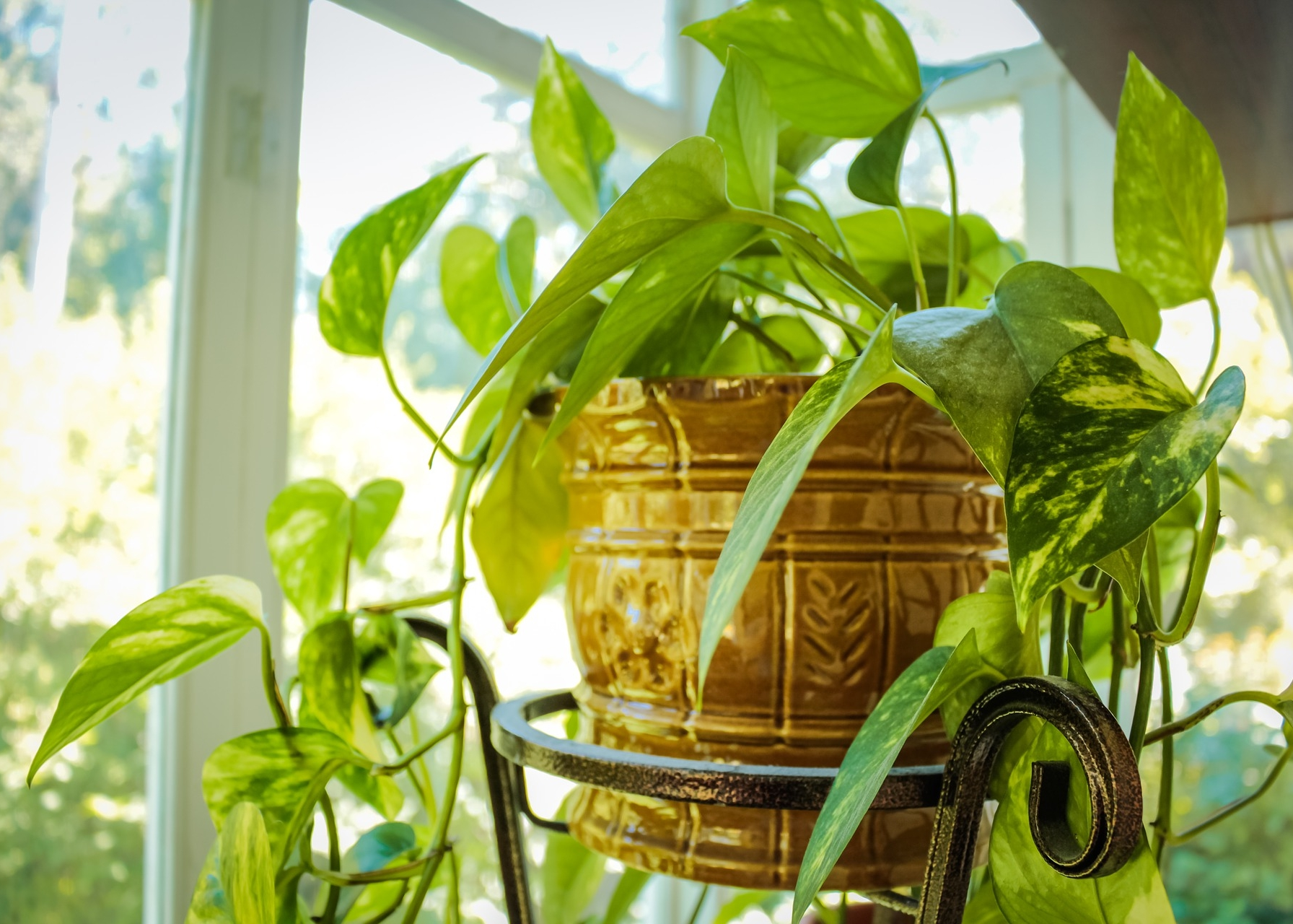 Guide des plantes d'intérieur: comment prendre soin des plantes d'intérieur