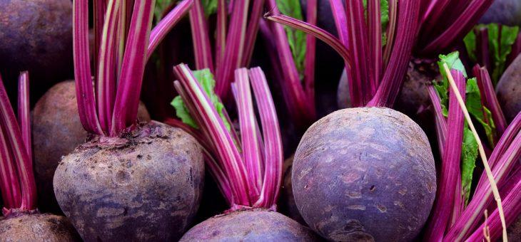 Betteraves: Planter, cultiver et récolter des betteraves