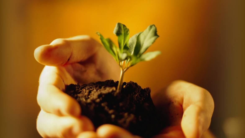 Préparation du sol pour la plantation: N-P-K, pH du sol, amendements du sol, etc.