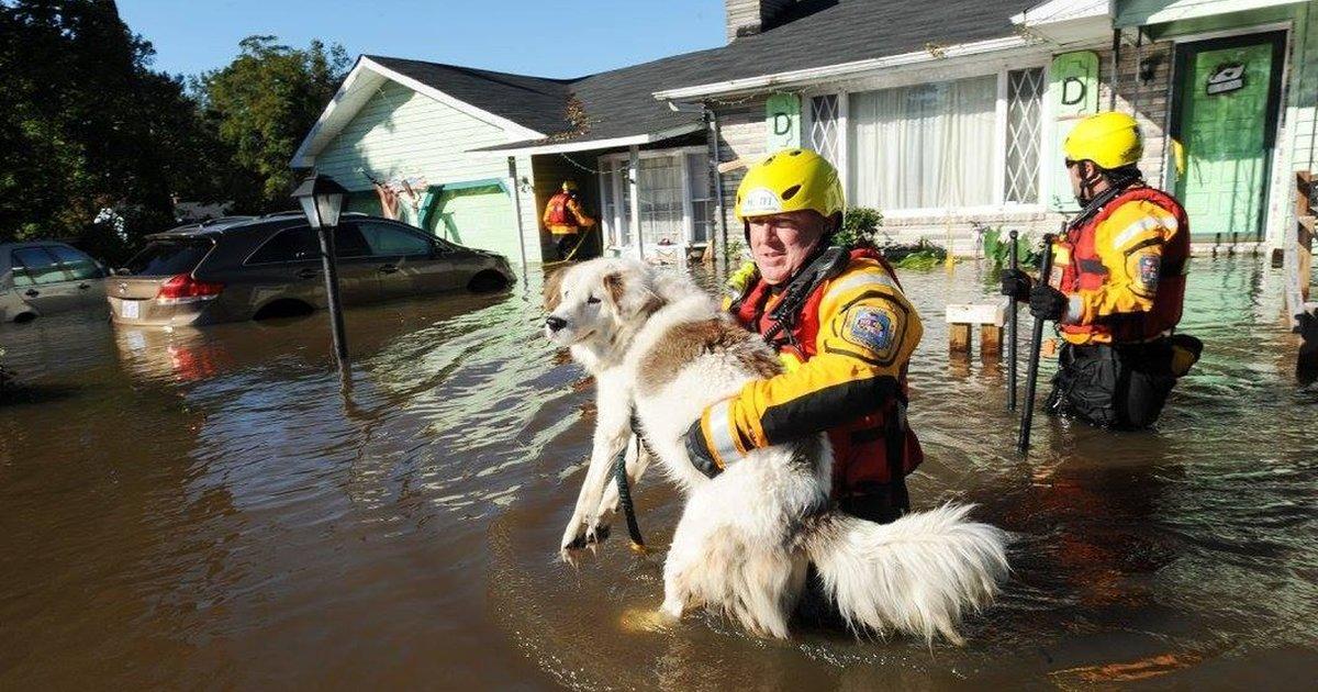 Comment survivre à une inondation: Conseils de sécurité et de survie après une inondation