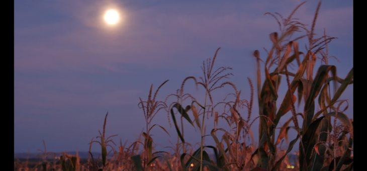 Pourquoi la lune de récolte semble briller pendant des jours!