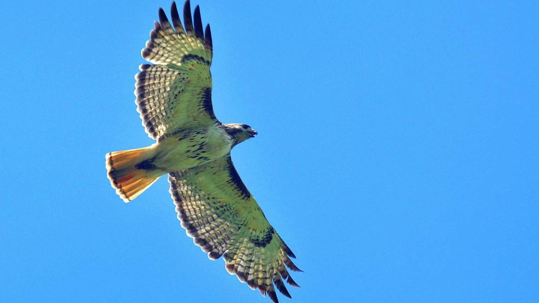 Automne: migrations d'oiseaux, hirondelles, faucons, ours