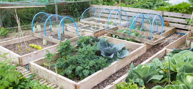 Conseils de rotation des cultures pour les jardins potagers