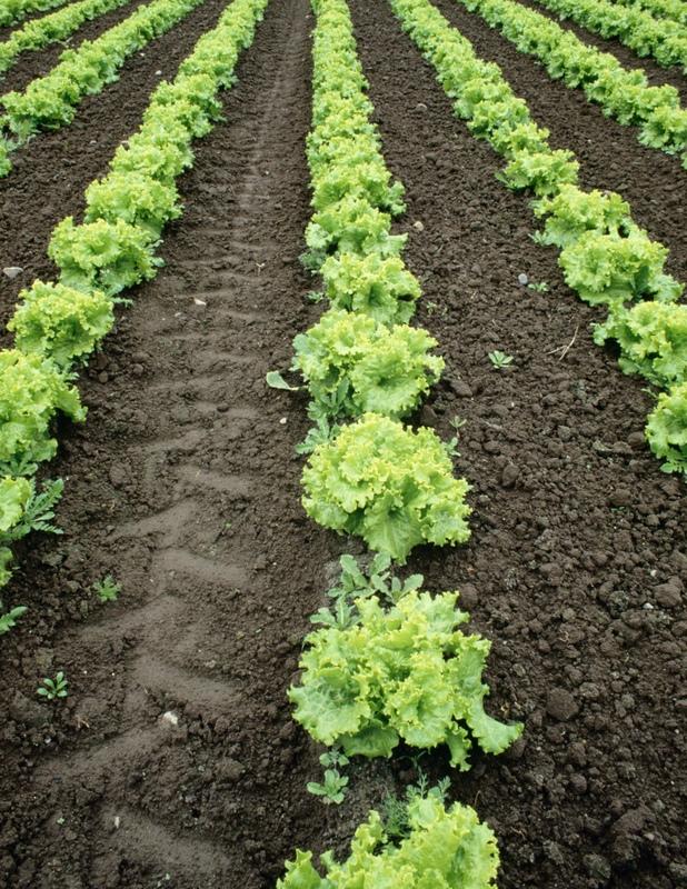 comment récupérer le sol de jardin en plantant des jardins négligés