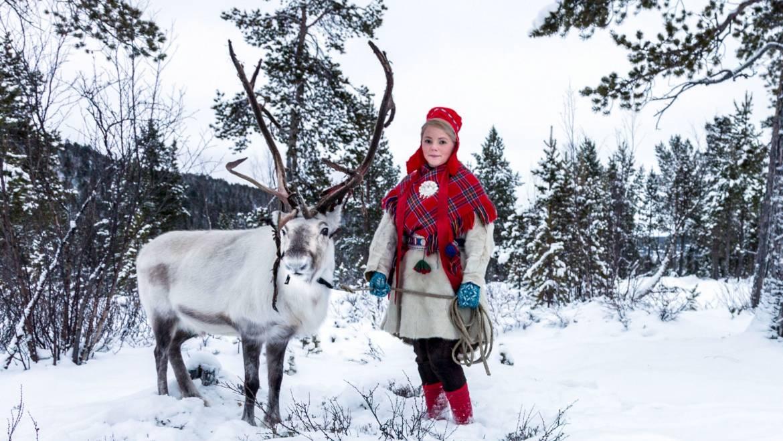 Rudolph est-il une fille?   Quand les rennes perdent-ils leurs bois?