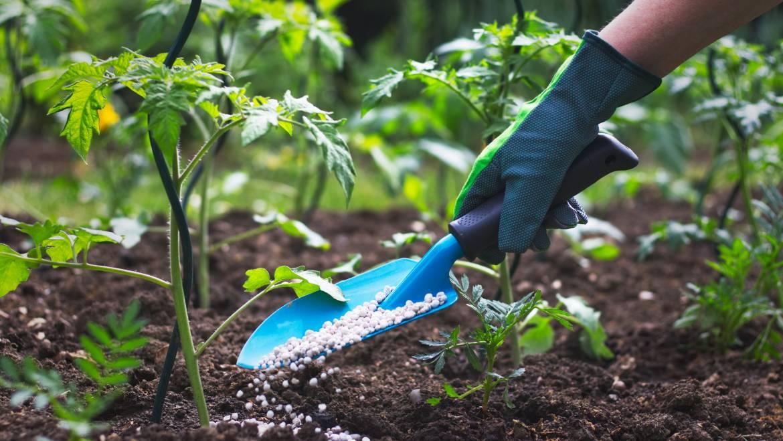 Comment appliquer des engrais à votre jardin