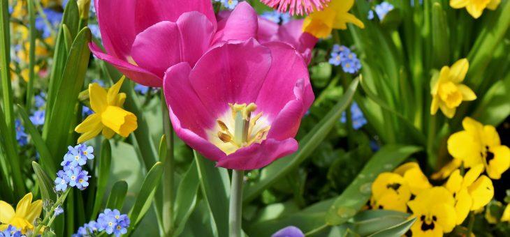Planter des bulbes d'automne pour les fleurs de printemps