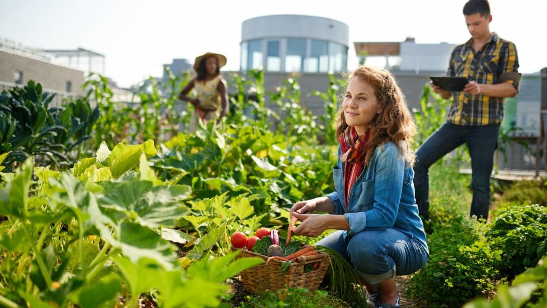 Jardins communautaires: quels sont les avantages et les inconvénients?
