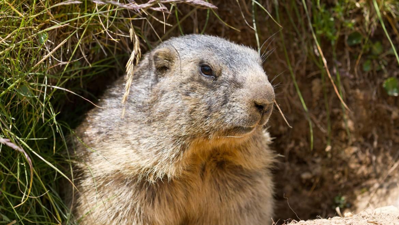 Journée de la marmotte et amusement astronomique]
