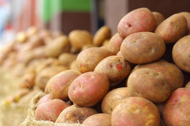 Pommes de terre: plantation, culture et récolte de pommes de terre
