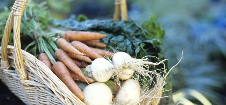 10 légumes faciles à cultiver à partir de graines