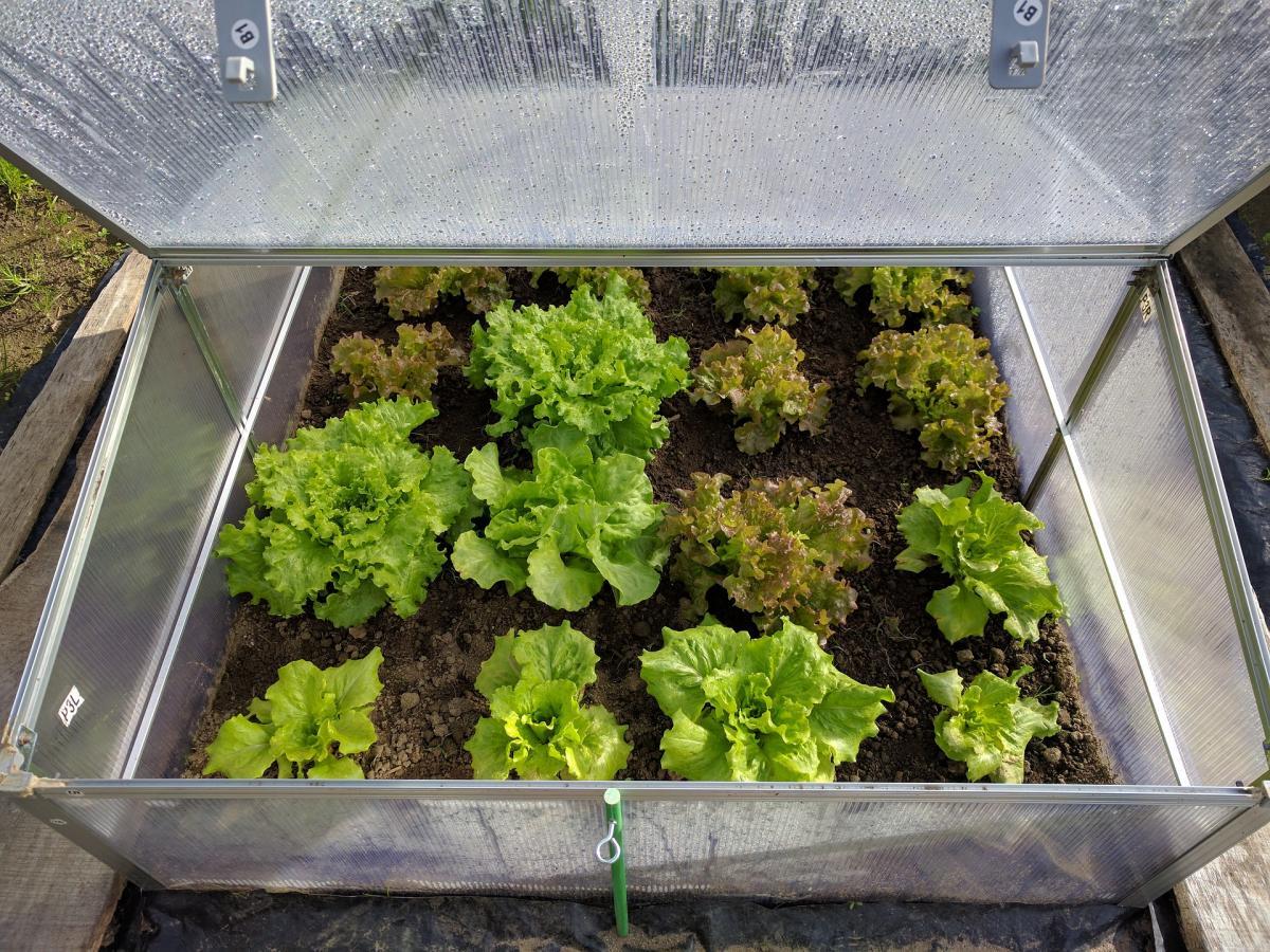 Comment construire un cadre froid: Conseils pour le jardinage à froid