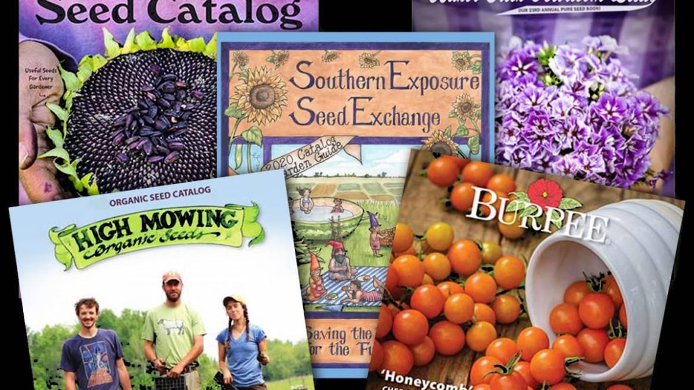 Plus de 40 catalogues gratuits de semences de jardin et sources de plantes en ligne