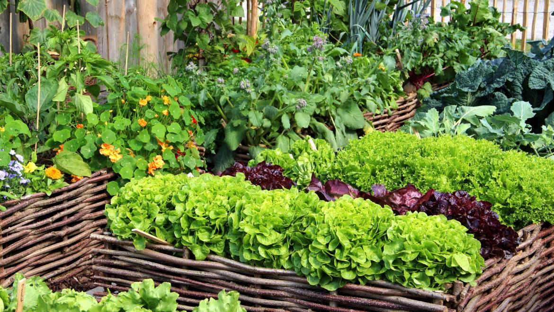 Rotation des cultures à quatre lits pour les petits jardins