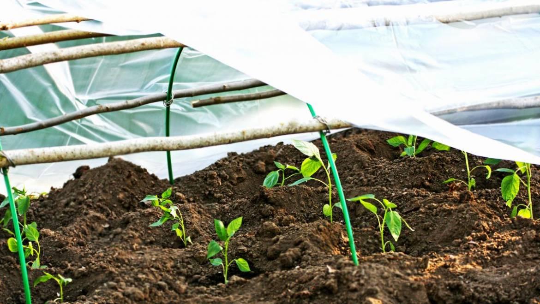 Protéger votre jardin du gel: comment prévenir les dommages causés par le gel